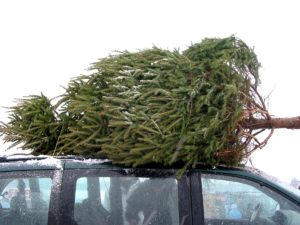 How to safely transport a Christmas tree on a car