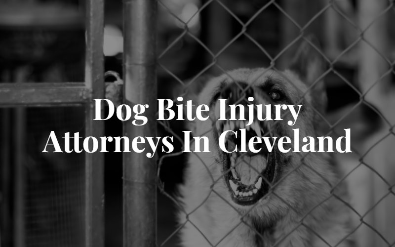 Cleveland Dog Bite Lawyer