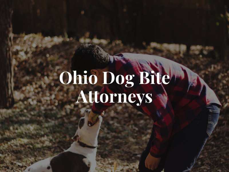 Ohio Dog Bite Lawyers