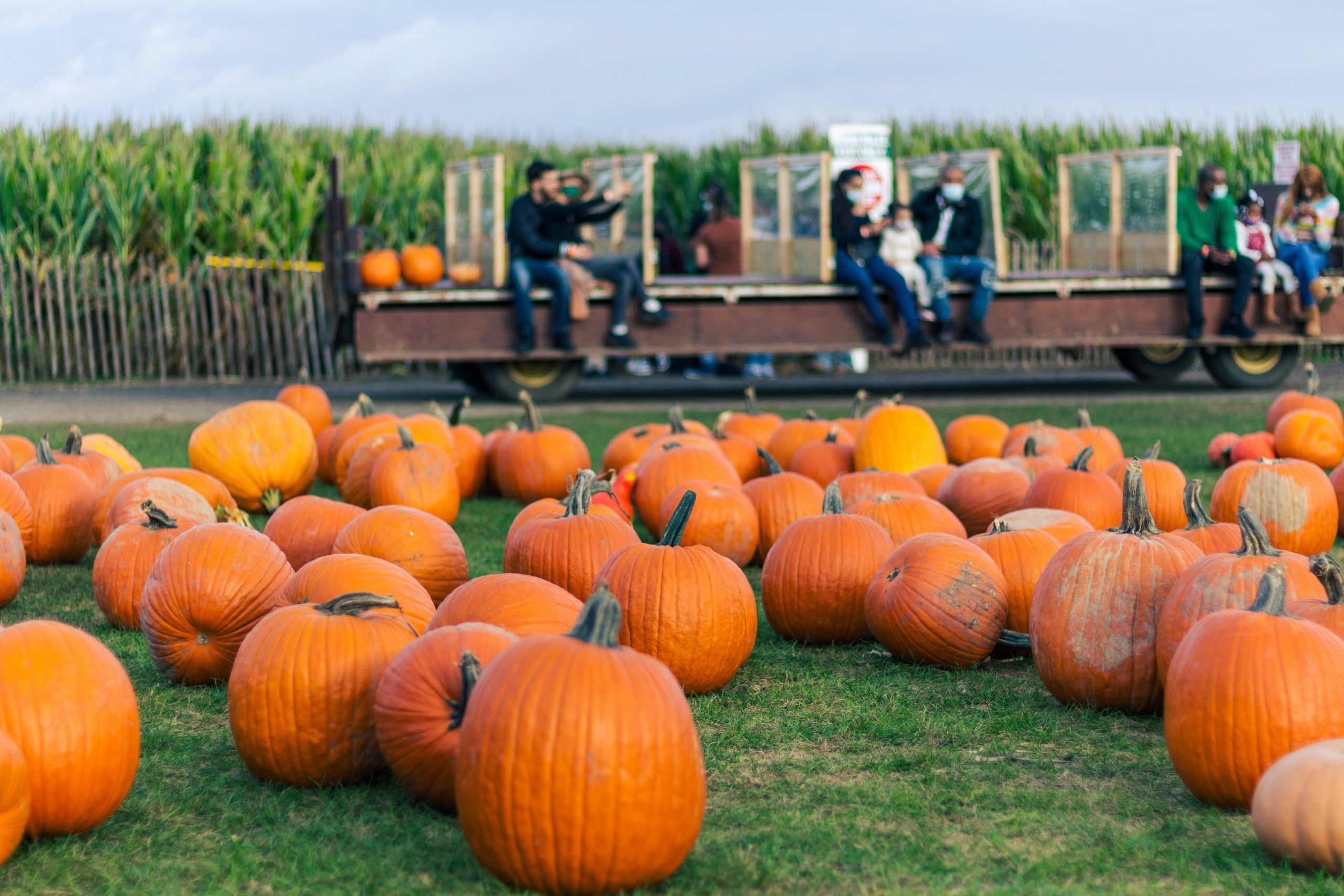 Ohio Pumpkin Patches to Visit this Fall