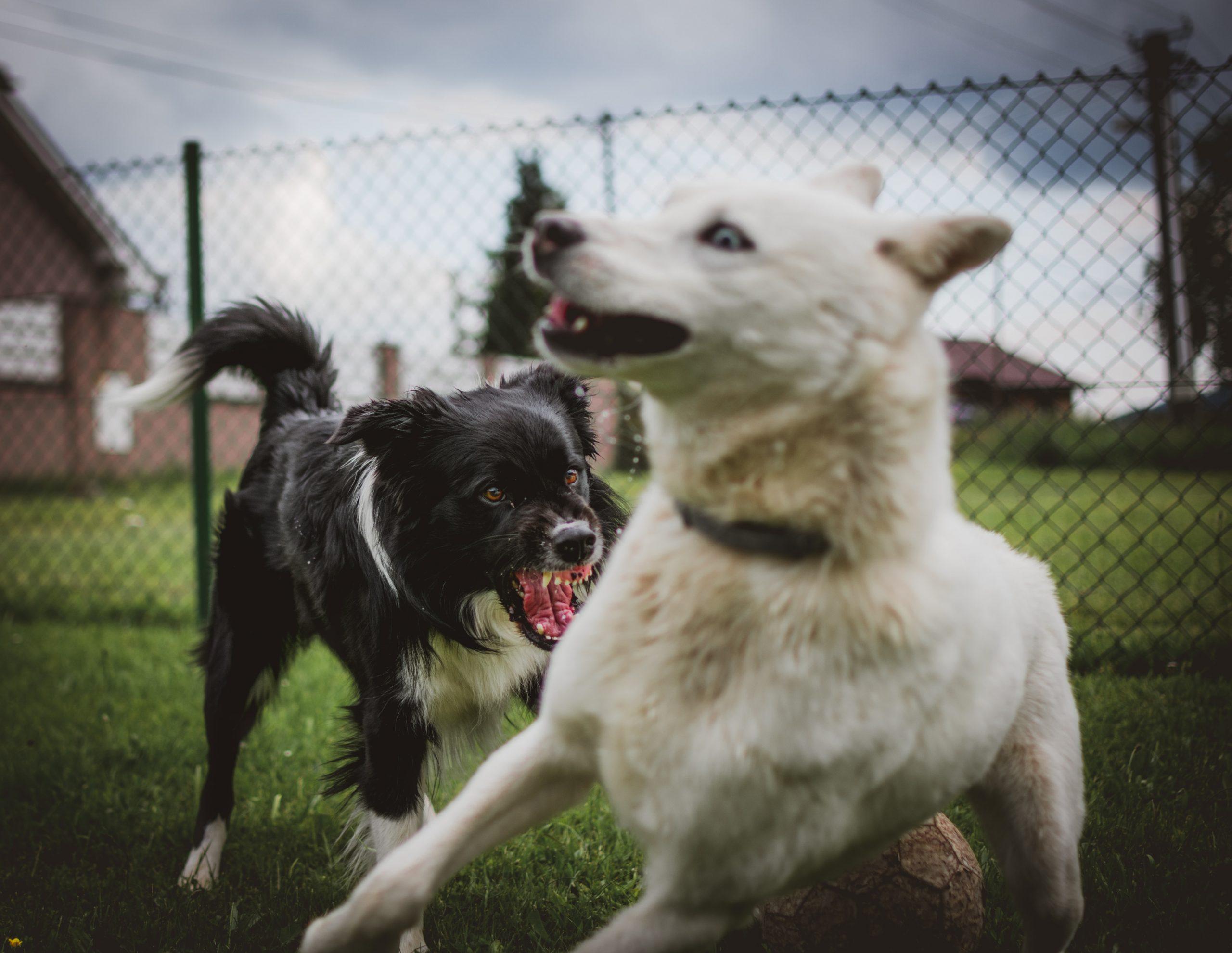 Avoiding Aggressive Dogs